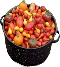 Heirloom Tomato Seeds - Diversity of Tomatoes in a Pot!